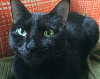 Heart warming photograph of cat