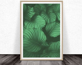 Tropical Leaf Print, Tropical Wall Art, Large Printable Poster, Colour Photography, Digital Download, Green