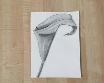 Calla Lily Drawing - Charcoal