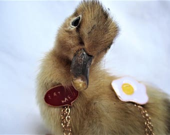 "Pin's ""eat me"" fried egg"