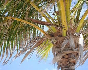 Palm Tree Photograph, Palm Tree Wall Art, Palm Tree Photography Print
