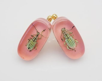 Pink lucite cufflinks with real glowing green beetles