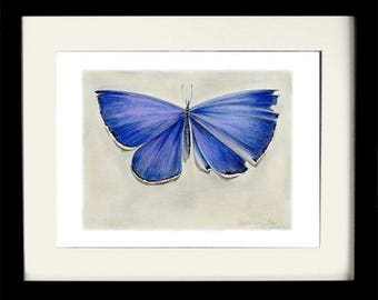 Blue Butterfly, fine art print, giclee, archival, nature, insects, natural history