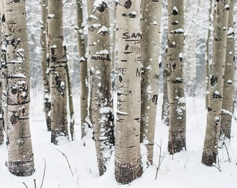 Birch Forest, Colorado Art, Forest Art Print, Nature Photography, Winter Trees, Birch Trees, Modern Wall Art, Minimalist Home Decor