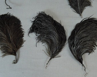 7 Vintage Millinery Hat Feathers, 4-1/2 to 6 inches long, 1800s 1900s Victorian Edwardian Black Plumes Feathers