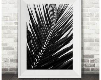 Mono Palm Leaf Print