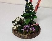 miniature hollyhock