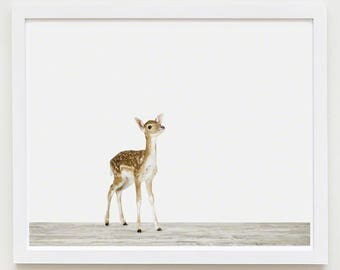 Baby Animal Nursery Art Print. Baby Deer. Animal Nursery Decor. Baby Animal Photo.