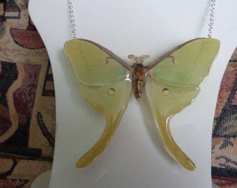 REAL Luna Moth Sterling Necklace THICK & SOLID