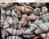 10% OFF Mixed Bulk Mitra Miter Mitre Shells- Spiral Topped Top Seashells w/ brown orange rust colorful markings & patterns/ Beach Crafts Art