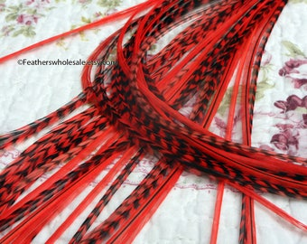 25 Neon Red Hair Feathers Bright Poppy Grizzly & Solid Feather Extensions Wholesale
