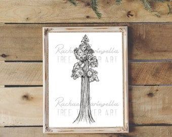 Giant Sequoia Art Print - Rachael Caringella - Giclee Fine Art Print - Pen and Ink Illustration - Giant Redwood Illustration