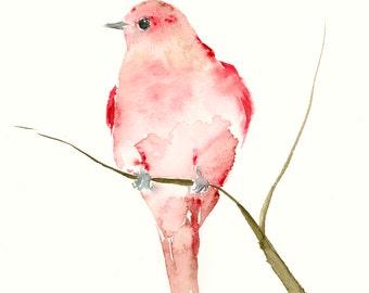 Art Print from my Original Watercolor Painting Raspberry Red Bird