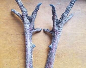 Turkey Feet - 1 Pair - Naturally Dried - Curiosity Item or Talisman