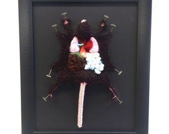 Brown Knitted Lab Rat: Framed with Black Background
