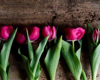pink tulip, floral nursery art, farmhouse decor, country decor, pink flower photo, romantic floral art, girly wall decor, tulip art print