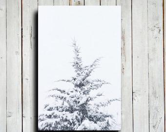 Snow Pine - Winter Pine tree - Winter photography - Winter tree - Snow pine tree - Winter decor - Winter art - Christmas art - Christmas