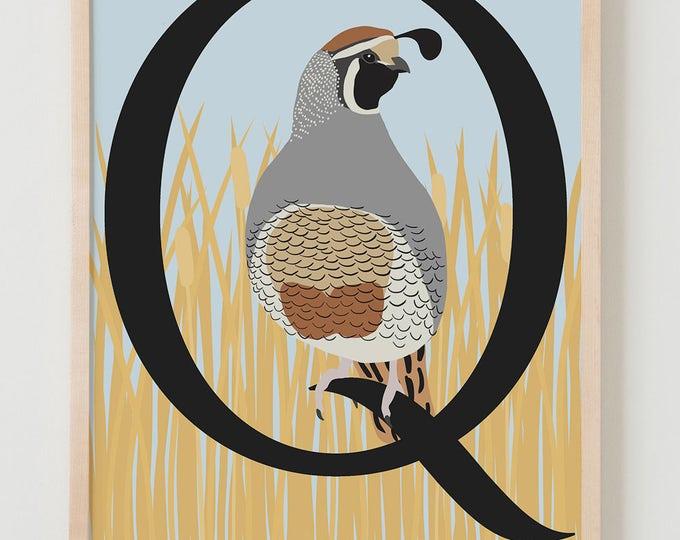 Animal Alphabet, Q is for Quail Fine Art Print