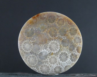 SALE Gorgeous round fossil coral cabochon, Natural stone, Jewelry making supplies B6677