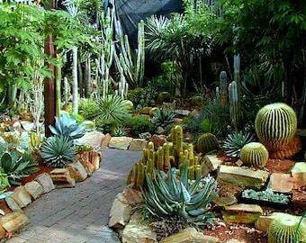 Cactus Collection, 50 seeds, mixed species, Echinocereus, Parodia, Mammillaria, Melocactus, Notocactus, Opuntia, Ferocactus, Gymnocalycium