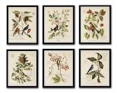 Vintage Bird and Botanical Print Set No.2, Giclee, Art Prints, Botanical Prints, Wall Art, Prints, Catesby, Bird Prints, Natural History Art