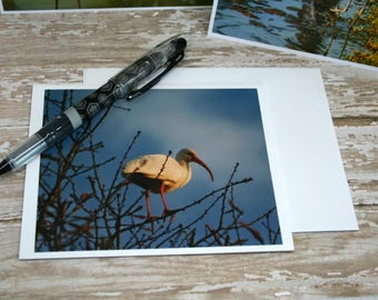 Bland Note Cards, Original Photographs Featuring Birds in the Low Country of SC on 4x6 Card Stock Set of 4