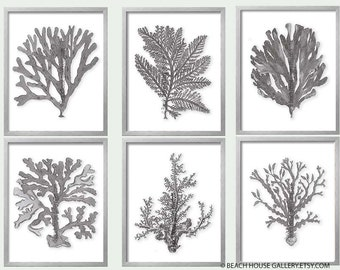Greige Wall Art, Gray Sea Coral Print Set of Six, Coral Wall Art, Coral Print, Gray Wall Art, Gray Coral Prints, Warm Gray Beige