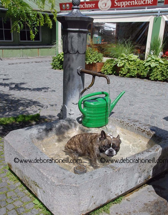 "Funny Animal Photography - Dog Munich Germany Viktualienmarkt fountain funny humorous hotdog pug ""German Hot Dog"""