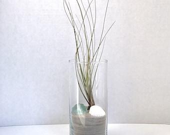Large Glass Tillandsia Air Plant Terrarium Organic Home Office Decor Gift Sand Shell Beach Glass Easy Care All Natural