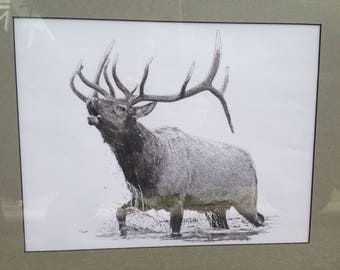 Bull Elk bugling in river original pointillism drawing: bull elk bugling drawing, elk art, elk art in dots, hunting drawing, Jackson Hole