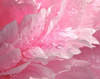 Flower Photography, Peony, Raindrops Macro, Pink, Fine Art print, Home Decor.