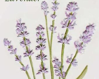 """4 1/4' x 4 1/4"""" Lavender Herb Tile"""