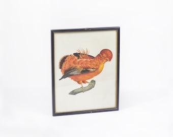 Exotic Bird art print frame.