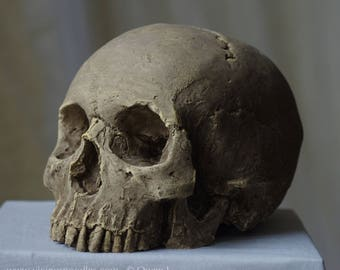 HUMAN SKULL REPLICA (natural) full size realistic replica made from plaster of Paris and painted for an aged, weathered effect