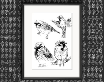 Sparrow Sketches Illustration Print