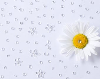 Diamonds and Daisies Photographic Print