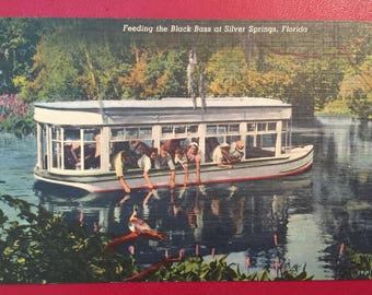 Vintage Postcard  Silver Springs Fl Glass Bottom Boat Feeding Black Bass Linen Mint