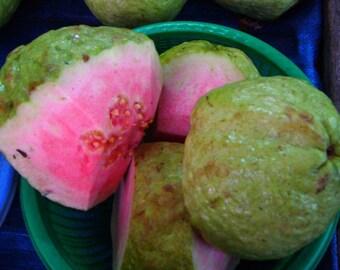 Psidium guajava Pink Apple Guava 15 seeds