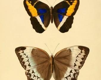 Butterflies exotic  prints 1867 63 prints