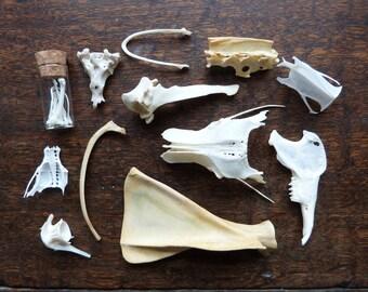 Vulture Culture Bones Curio Collection Box