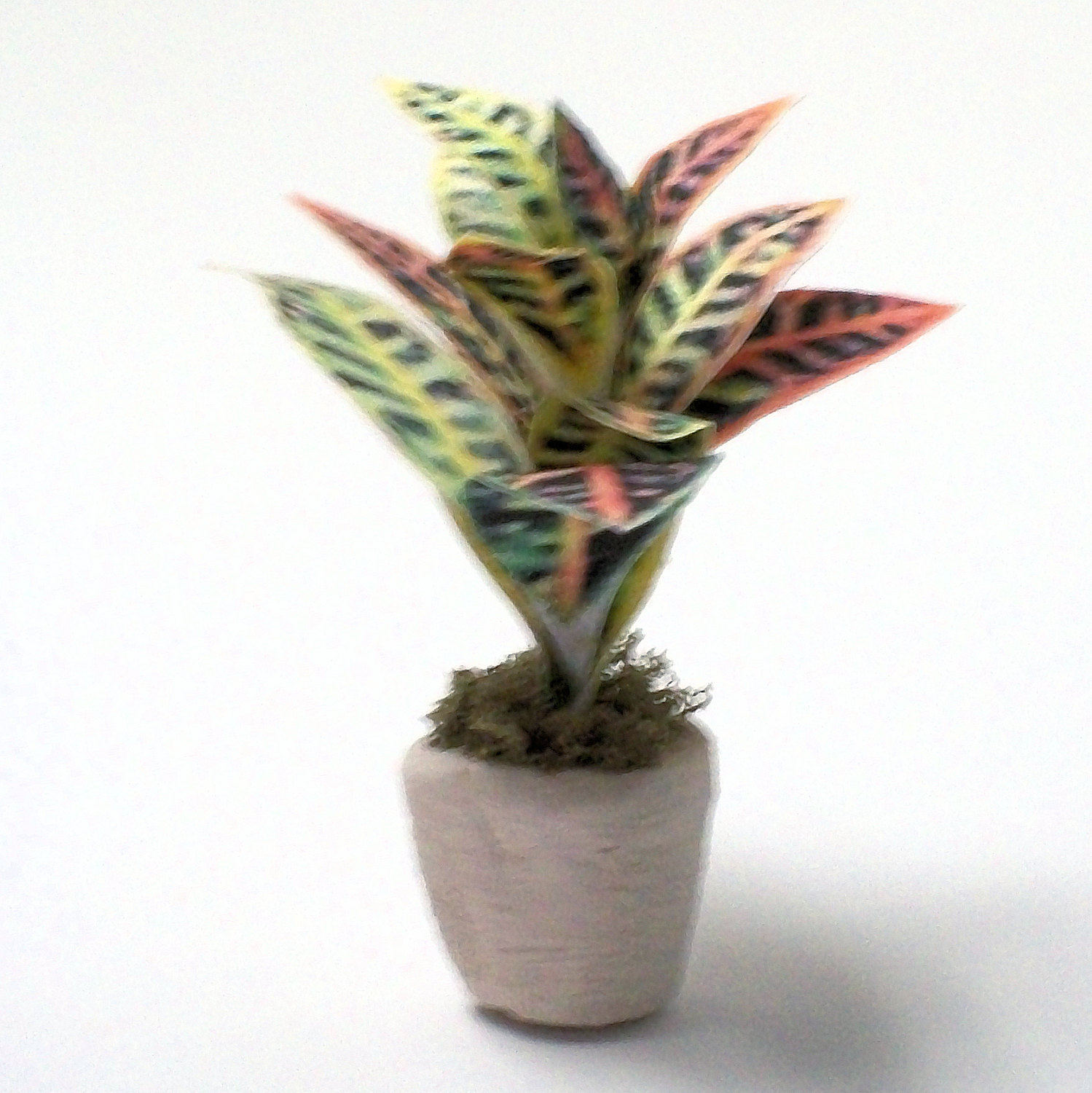 Miniature Verigated Croton Potted Plant In An Off White Clay