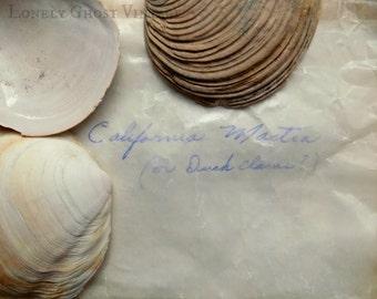 Seashell Photo / Original Photography / Beach Cottage Decor / Duck Clams / Nature Photography