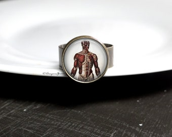 Body Anatomy Ring Human Muscle Workout Ring Gift For Doctor - Fitness Ring For Personal Trainer - Glass Human Anatomy Nurse Ring Doctor Ring