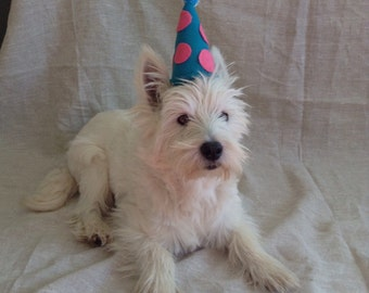 Customizable Party Hat for Dogs