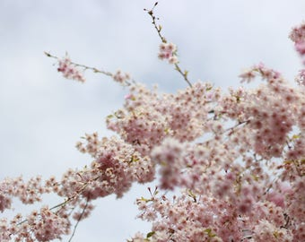 Nature Photography, Floral Photography, Japanese Garden, Spring, Blossoms