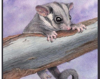 Baby Leadbeater's Possum. Endangered Species. 4 card Set.