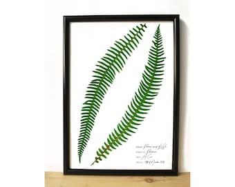 Fern botanical art - Vintage style print - Botanical home decor - Botany art - Herbarium print