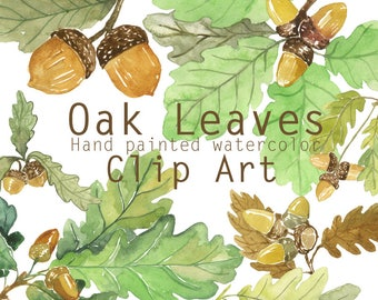 Oak leaves and acorns watercolor clip art, Printable foliage, Forest clipart, Botanical clipart, Fall clipart, Autumn tree leaves, Oak tree