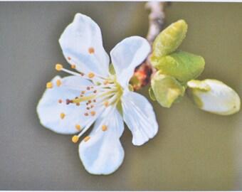 Bloom - photographic postcard