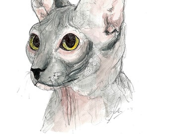 Sphynx Cat, watercolor print, size A3, A4 or A5.